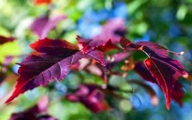 Обои Листья, осень, бурые