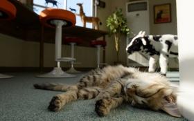 Обои кошка, кот, комната, сон, спит, лежа