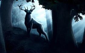 Картинка лес, глаза, деревья, ночь, фантастика, темно, олень