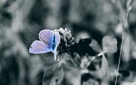 Обои фото, бабочка, цветок, обои, ч/б, природа, растения