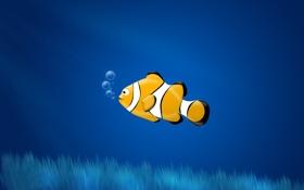 Обои пузыри, рыбка, crown fish