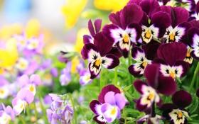 Обои цветы, природа, яркие, лепестки, красивые
