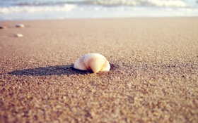 Картинка песок, море, пляж, вода, солнце, макро, свет
