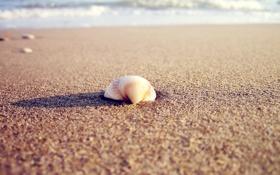 Картинка 2560x1600, nature, water, тень, sand, sea, пляж