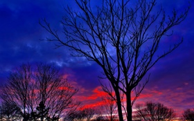 Картинка небо, облака, деревья, вечер, силуэт, зарево