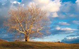 Обои природа, облака, голое, небо, дерево