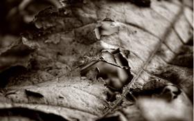 Картинка трещины, лист, сухой, дырки, прожилки