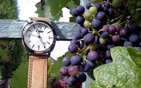 Картинка листья, время, дерево, настроения, часы, кожа, виноград