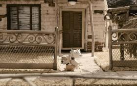 Обои дом, мультфильм, собачки, пластилиновый, мэри и макс