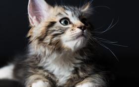 Картинка котёнок, фон, глаза, взгляд