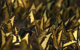 Обои бабочки, насекомые, обои, разное