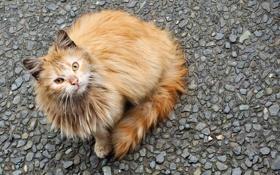 Обои кошка, взгляд, морда, камушки