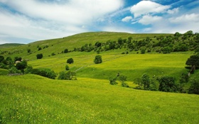 Картинка зелень, небо, трава, деревья, дома, Пейзаж