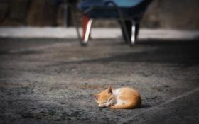 Картинка свет, котенок, сон, Улица