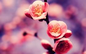 Обои цвета, цветы, ветка, весна, ярко, color