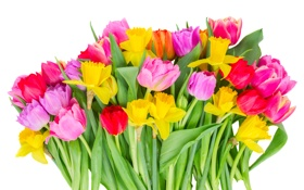 Обои тюльпаны, tulips, bouquet, flowers, colorful