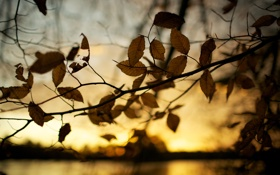 Обои листья, фотографии, осень, природа, осенние обои, макро, дерево