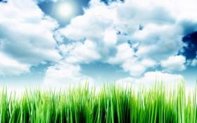 Обои Sky Over The Grass, облака, небо, травка
