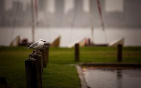 Картинка дождь, птица, улица