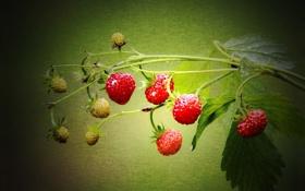 Обои свет, полотно, лист, стебель, земляника, клубника, ягода