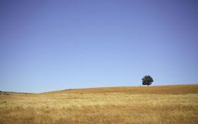 Обои трава, деревья, фото, дерево, холмы, пейзажи, обои для рабочего стола