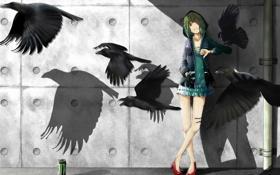Картинка птицы, стена, девочка, банка, вороны, тени, vocaloid