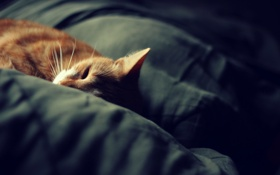 Картинка кошка, сон, одеяло, cat