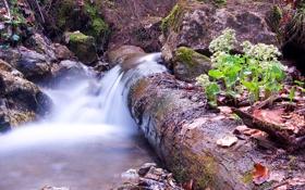 Обои лес, листья, ручей, камни, поток, растения, бревно