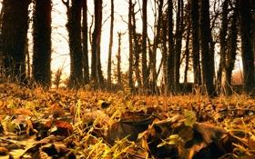 Картинка осень, листья, деревья, золото
