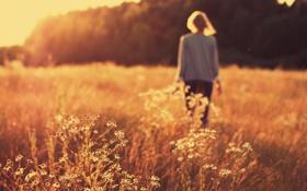 Картинка поле, девушка, солнце, макро, лучи, закат, блондинка