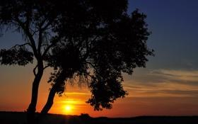 Обои поле, небо, солнце, закат, дерево, вечер, sky