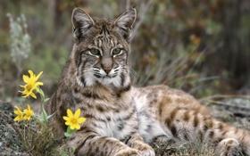 Обои цветы, Кошечка, изящество