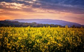 Картинка поле, цветы, Природа