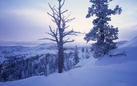 Картинка зима, снег, деревья, горы, ветки, холмы, сказачно
