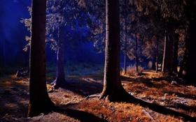 Обои лес, трава, свет, пейзаж, закат, опушка