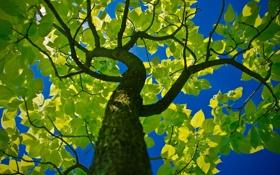 Обои небо, природа, ствол, зелень, листва, дерево