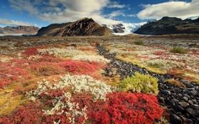 Обои камни, горы, небо, цветы