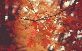 Картинка осень, листья, деревья, природа, ветви, боке