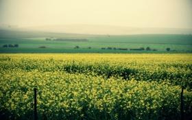 Картинка поле, лето, пейзаж, цветы, природа, холмы, утро