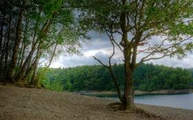 Обои природа, река, фото, Германия, березы, North Rhine-Westphalia