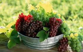Обои ягода, тазик, виноград, грозди, зеленый, лист