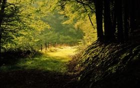 Обои лес, лето, природа, тени