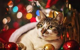 Обои Новый год, шары, праздник, украшения, кошка