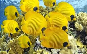 Обои аквариум, море, рыбы