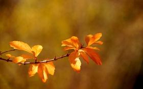 Обои листья, стебель, leaves, боке, bokeh, stalk