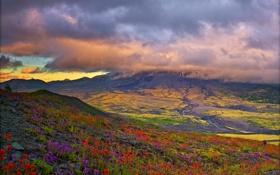 Обои простор, облака, горы, луга, поля, цветы