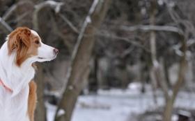 Картинка друг, собака, профиль