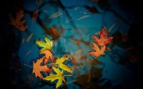 Обои осень, листья, цвета, фото, фон, обои, лужа