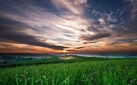 Картинка закат, облака, трава, небо, поля