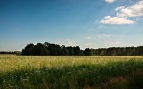 Картинка поле, лес, небо, лучи, деревья, простор, Россия